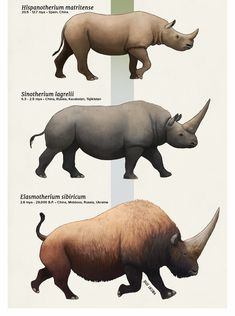 Evolution Series: An Army of RhinosLiving rhinos are generally associated with big horns, thick hairless skin and tropical habitats. But their ancestors didn't always fit that description, with some...