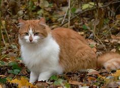 cybergata:  Beautiful in the park by evisdotter on Flickr.