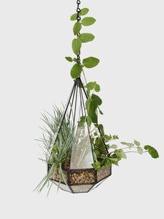 Suspended Teardrop terrarium. A modern takeoff on a Wardian case. For indoor plants / houseplants.