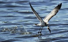 seagull-fish-shell-beachjpg-5be930eb46079018.jpg (1024×642)