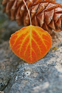leaf photography - Google zoeken