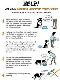 Leash Training, Dog Training Tips, American Alsatian, Dog Growling, Free Dogs, Dog Hacks, Retriever Dog, Border Collie, Mammals