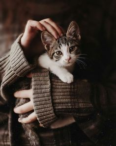 Cats become more affectionate once they fully mature - maybe a year or so. She is now two years old, and she is still very affectionate. Animals And Pets, Baby Animals, Cute Animals, Crazy Cat Lady, Crazy Cats, I Love Cats, Cute Cats, Cat Playground, Cat Birthday