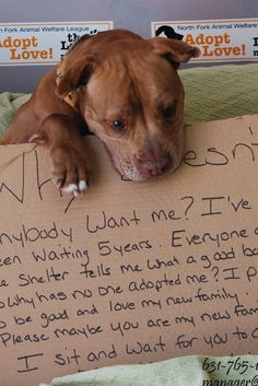 UPDATE: 'Why Doesn't Anybody Want Me?' Pit Bull Finally Gets A Home After Heartbreaking Picture Goes Viral  :-)