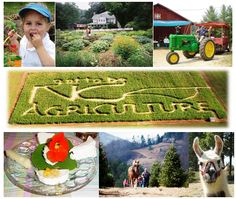 Find a North Carolina Agritourism Farm for Fall Hay Rides, Mazes, Pumpkin Patches and more http://www.ncagr.gov/markets/agritourism/index.htm