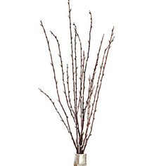 Pussy Willow Spray - Set of 6 | Botanicals & Plants | Accessories | Decor | Z Gallerie