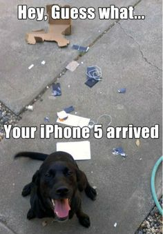 Well done, doggy! Destroyed an iPhone 5. Destroying Apple products will land you more cookies!