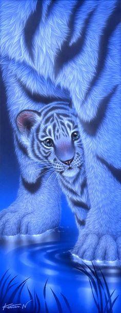 Shy2 - White baby tiger by Kentaro Nishino