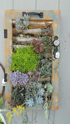 Old shutters, door hardware, succulent shutter planter, reclaimed, vintage, repurposed, succulents, distressed