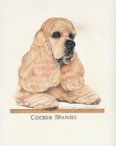 Cocker Spaniel Original Art-Chris Lewis Brown *D
