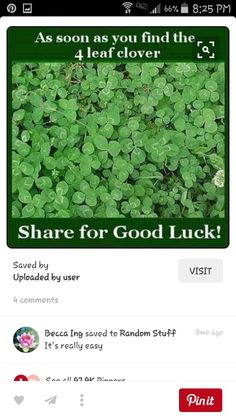 But they are not clovers