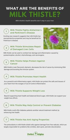 Is milk thistle for liver health a good idea? In this article we explore the surprising liver-protecting benefits of this powerful and healing herb. Healing Herbs, Medicinal Herbs, Holistic Healing, Holistic Care, Health And Nutrition, Health Tips, Health And Wellness, Health Fitness, Milk Thistle Benefits