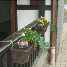 Blumen vor dem Eingang
