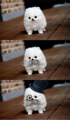 tiny dog. tiny mustache.