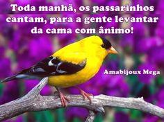 Mensagem: Os Passarinhos Cantam Nas manhãs, escutamos o canto dos passarinhos, fazendo uma verdadeira sinfonia, composta com notas musicais de alegria; é a mensagem destes pequenos seres da natureza, que cantam para o nosso despertar! #Mensagem  #ânimo #OsPassarinhosCantam #SeresdaNatureza https://amabijouxmega.blogspot.com.br/2016/10/mensagem-os-passarinhos-cantam.html