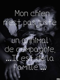 "citations animaux de compagnie | Mon chien n'est pas juste un animal de compagnie...""... Cute Baby Animals, Animals And Pets, Animal Facts, Whippet, I Love Dogs, Cute Puppies, Dog Lovers, Dog Cat, Best Friends"