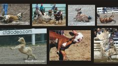 Ban rodeo, rodeos, lace evidence in Avare-SP