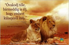 Perseverance needs a lot of courage.Courage is not rage! Courage is doing what is right even when you are scar Isagenix, Lion Couple, Lion Quotes, Bae Quotes, Faith Quotes, Lion Images, Do Everything In Love, African Proverb, Sweet Love Quotes