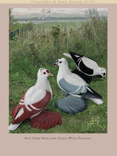 Pigeon art: Spot Fairy Swallows Saxon Wing Pigeons by Gary Romig