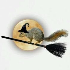 Witch Squirrel Tile Coaster by catsclips - CafePress Squirrel Art, Cute Squirrel, Baby Squirrel, Squirrels, Animals And Pets, Baby Animals, Funny Animals, Cute Animals, Squirrel Pictures