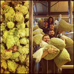It's gettin' crazy over here in the Production Area this morning! These fresh Fauquier grown whole cone hops from @powersfarmbrew were just used to make a batch of Virginia Hop Harvest Amber IPA. This is how we do Mondays  #oldbusthead #fauquier #fauquiercounty #powersfarm #wholeconehops #craftbeer #beer #brewery #vinthill #virginia #vabeer #drinklocal #drinkcraft #drinkingcraft #hops #craftbeerlove #craftonly #thebeernation #vabeertrail #instabeerofficial #beerme #vacraftbrews by…