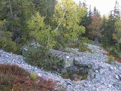 Jeseníky - Suchý vrch - kamenná moře