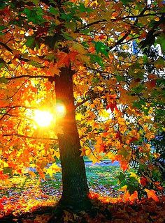 ✯ The Colors Of Autumn