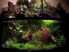 Win's Corner Tank – APE – Aquatic Plant Enthusiasts Corner Aquarium, Aquarium Design, Tanked Aquariums, Vivarium, Aquatic Plants, Planted Aquarium, Bonsai, Cute Animals, Water Gardens