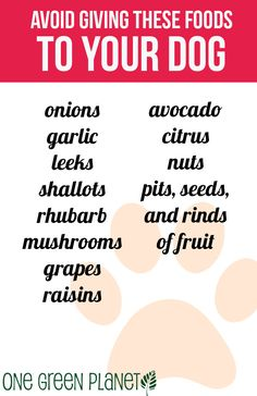 How to Add Summer Fruits and Vegetables to Your Dog's Diet http://onegr.pl/1vWEZn9 #summer #veganpet