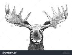 Moose sketch