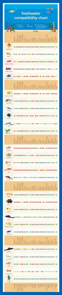 Fish Compatibility Chart  Saltwater  Fish    Fish And
