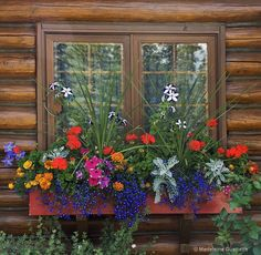 Harmony of colors by Madeleine Guenette Balcony Flower Box, Window Box Flowers, Flower Planters, Fake Flowers, Flower Boxes, Beautiful Flowers, Container Flowers, Container Plants, Container Gardening