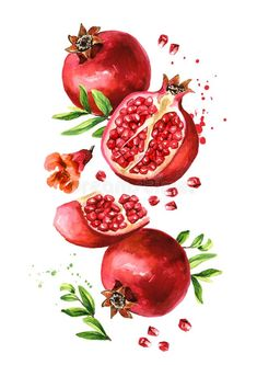 Pomegranate Drawing, How To Cut Pomegranate, Fruit Illustration, Food Illustrations, Glass Painting Patterns, Artsy Background, Decoupage Printables, Leaf Drawing, Pintura