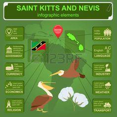 Saint Kitts y Nevis infografía, datos estadísticos, de las vistas. pelícano marrón, flor de algodón, símbolo nacional. ilustración vectorial