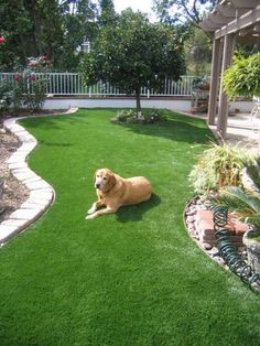 OK I could do this in my yard.  conserve water and looks great all year long.