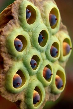 Ideas for macro nature photography seed pods