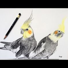 All done!  Tag someone you know owns a cockatiel