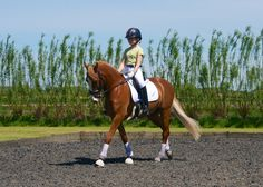 Training at BD BRYDs Northern camp May 2013 #dressage
