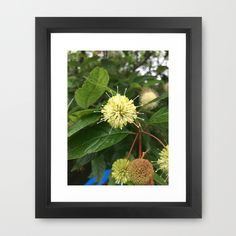 Naturals by Nikki - Seed Spikes Framed Art Print