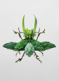 Using flowers, leaves, twigs, and seeds, Canadian artist Raku Inoue creates intricate portraits of insects. Dragonfly Garden Decor, Dried Flower Arrangements, Dried Flowers, Colossal Art, Pressed Flower Art, Insect Art, Canadian Artists, Nature Crafts, Pet Portraits
