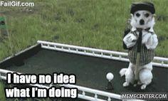 Dog Yeah, Dog!  | Visit http://gwyl.io/  for more diy/kids/pets videos