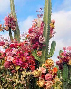 Dark Wallpaper Iphone, Flower Phone Wallpaper, Air Plants, Cactus Plants, Whatsoever Things Are Lovely, Garden Boxes, Indoor Garden, Aesthetic Wallpapers, Flower Power