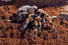 Spider Symbolism Animal Totems have significance in this world as well as something powerful to teach us. Delve into the Symbolism of the Spider Animal Message and Totem.
