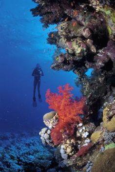 Outdoor Careers: Geoscientist, Hydrologist, Wildlife Biologist, Forestry