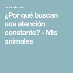 ¿Por qué buscan una atención constante? - Mis animales