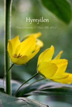 Runotalon voimakortti Hymyilen