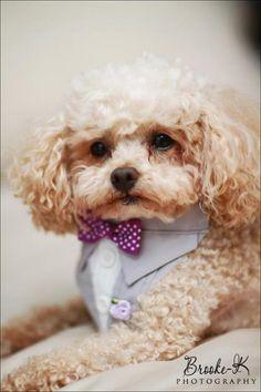 Dog Suit Bandana Sz XS S M by happydapperdogs on Etsy, $14.99