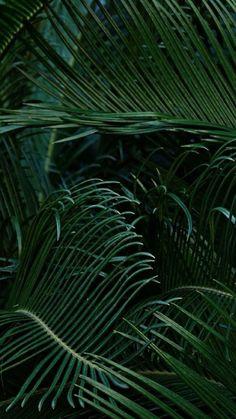 Tumblr plant wallpaper