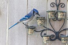 Bird Feeder Fence Decor-20 Fence Decoration Makeover DIY Ideas
