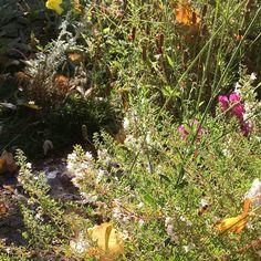 Make your fall garden bee-friendly!